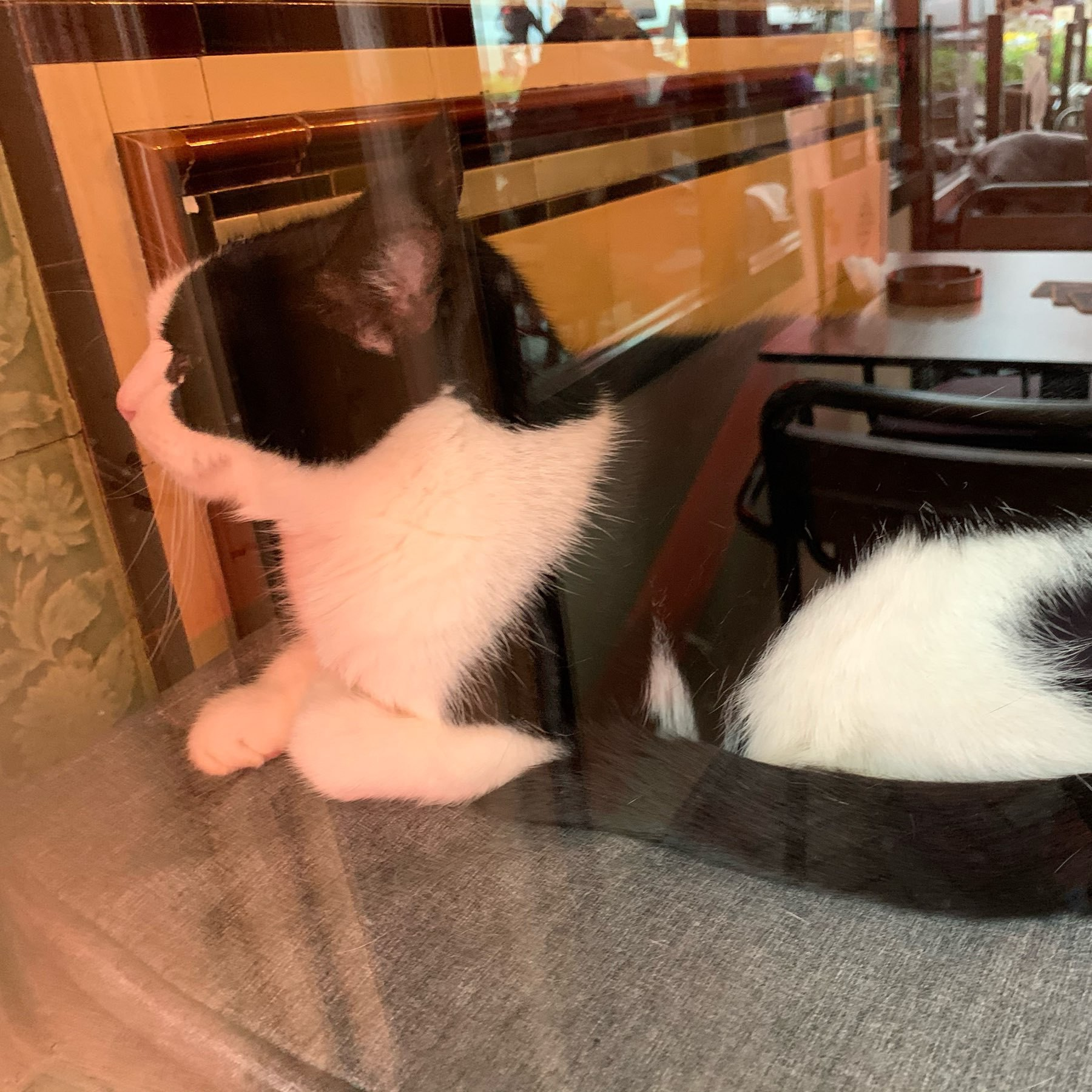a black and white cat holding court in the window of a cafe